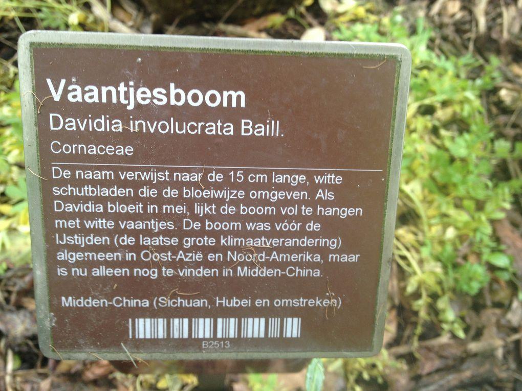 Hortus Botanicus - Amsterdam