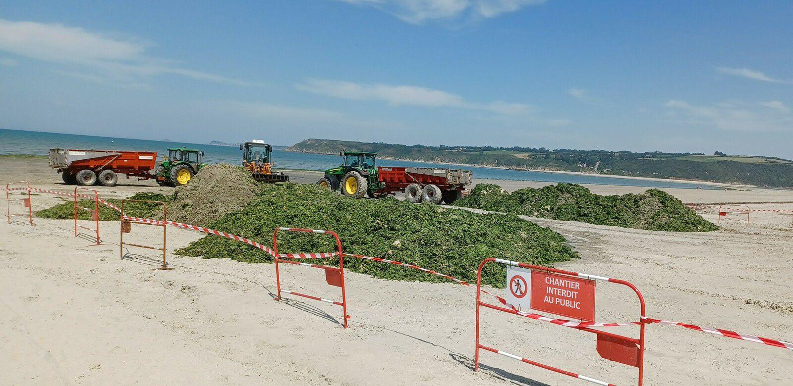 Ramassage algues vertes : Baie de saint Brieuc, plage du Bon Abri à Hillion-22 (19/07/2021)