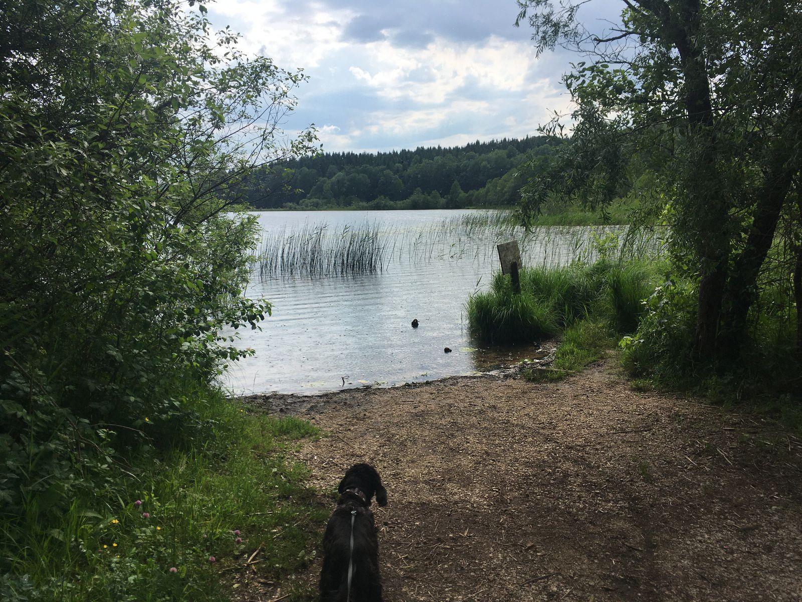 27 juin 2021 : Cravant / Lac du Petit Maclu / Lac du grand Maclu