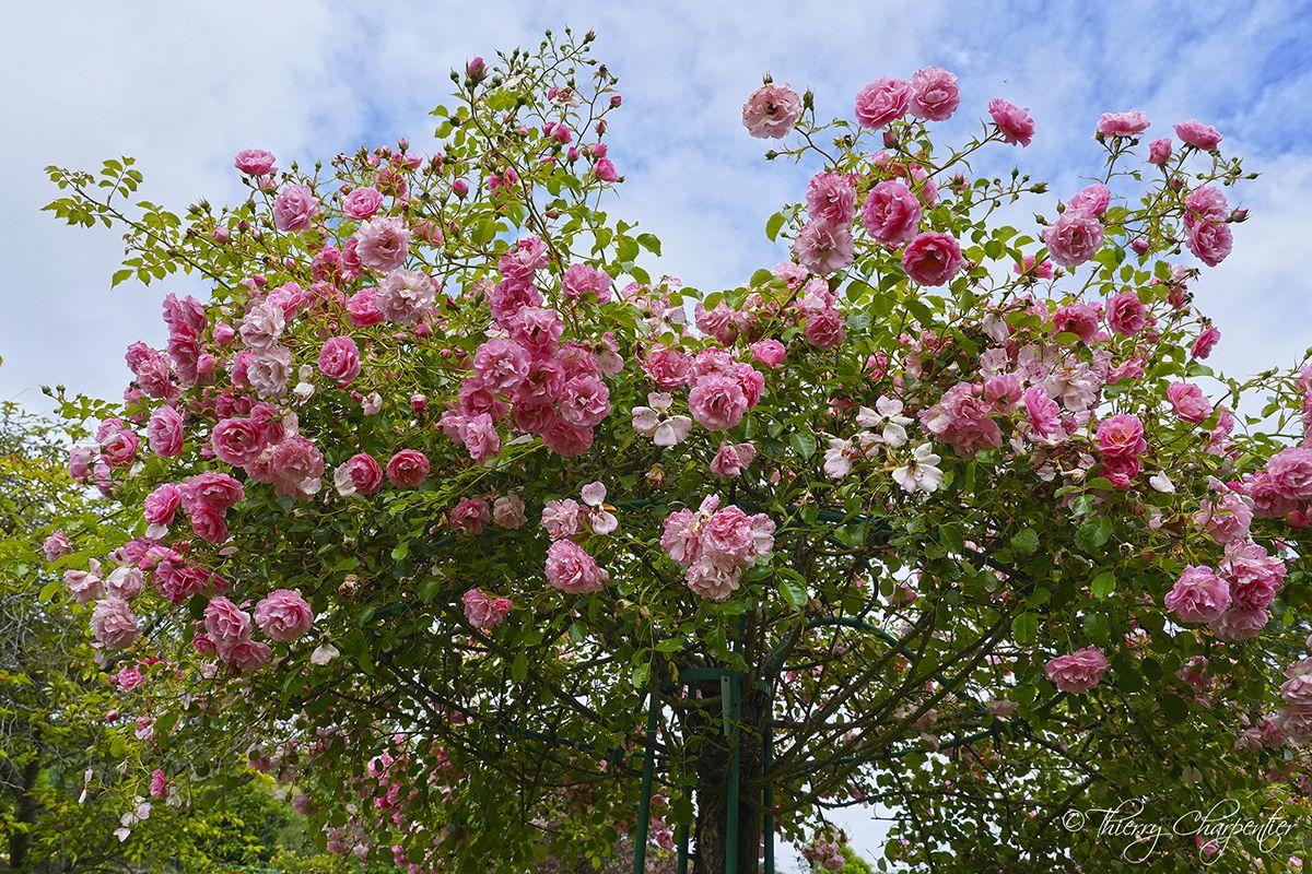 Giverny - Maison et jardins de Claude Monet