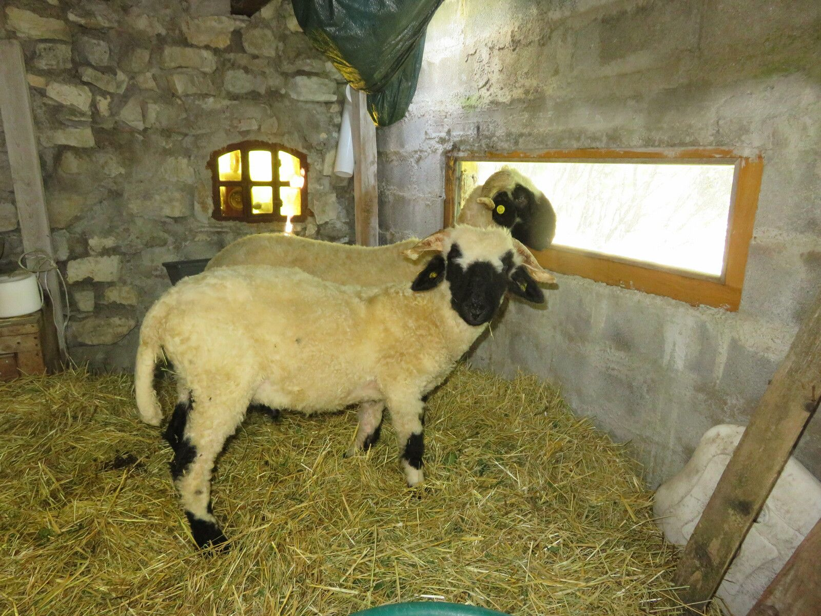 La Mure-Argens: Une ferme atypique s'est créée au village