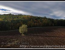 L'arbre sous le soleil matinal d'octobre ...