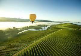 La Tasmanie et la Vigne