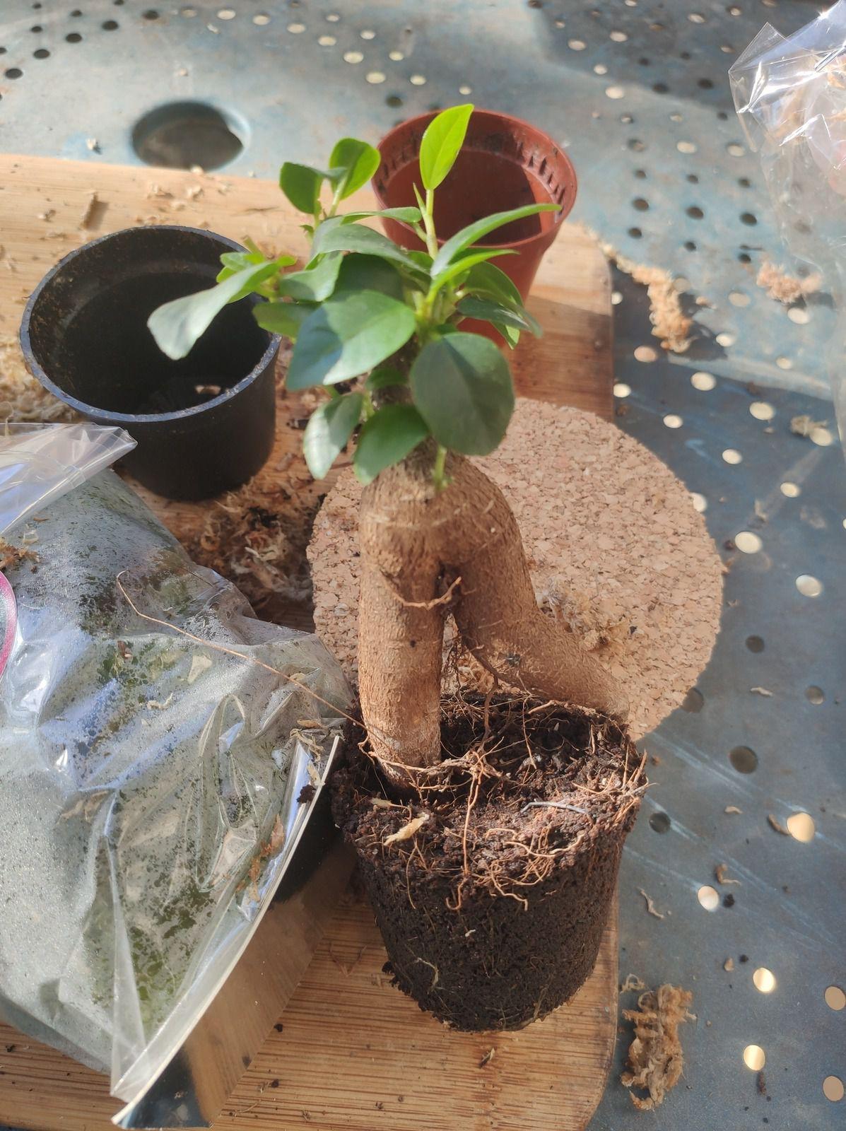 Un joli terrarium à faire soi même