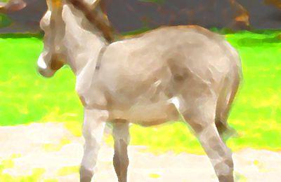 Contes pour enfants - Au Jardin des Tibous, il y a... des animaux de la ferme - Petit âne