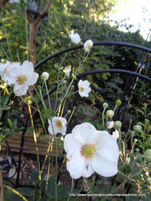 Mon jardin Le Clos fleuri en septembre