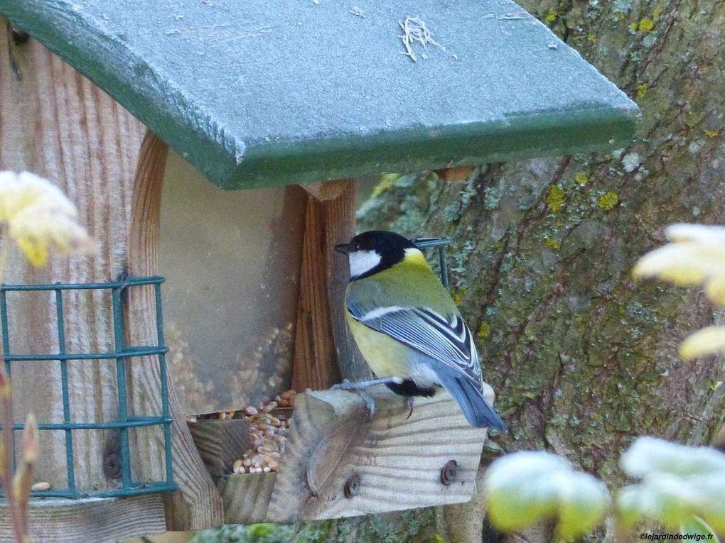 Une mangeoire pour les oiseaux en hiver.