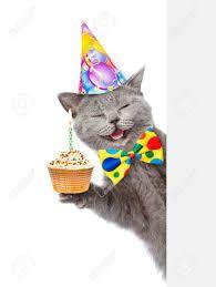 Bon anniversaire aux chats ...