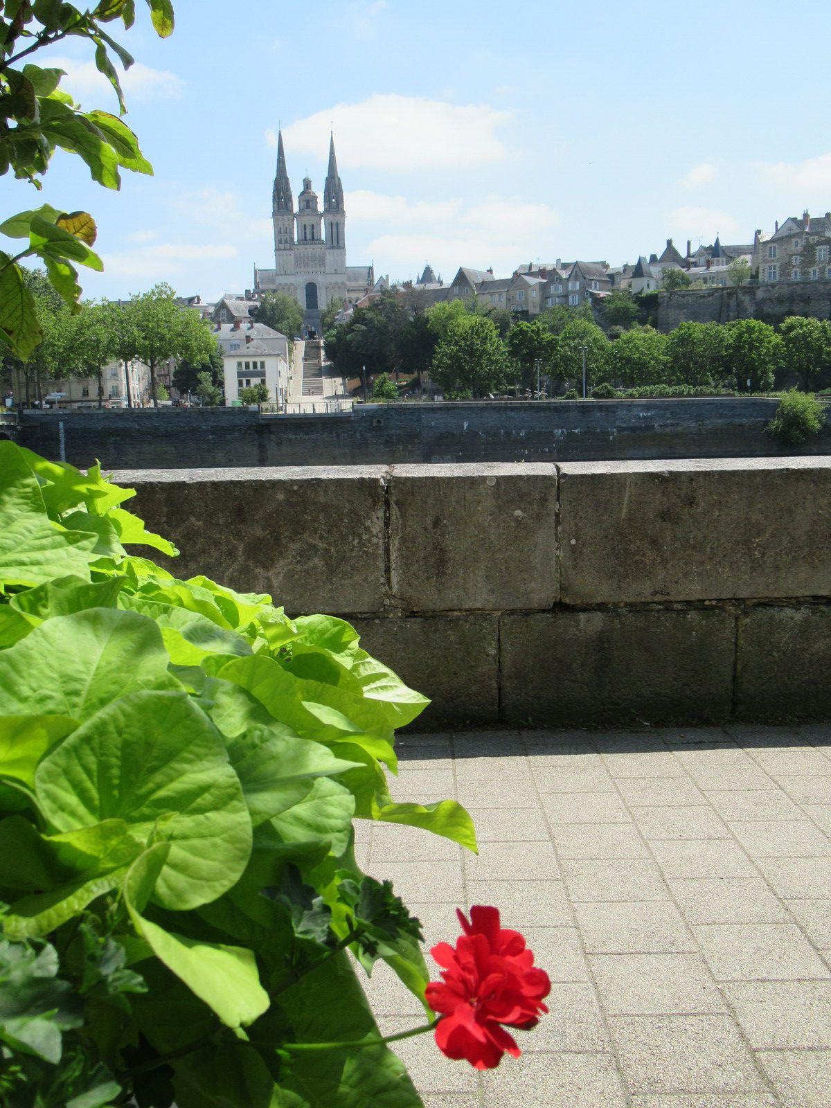 Au fil de la Mayenne (et de la Maine) : Etape 8 - Montreuil-Juigné / Bouchemaine - 46,1 km - A.R