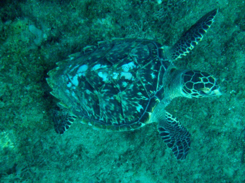 tortue de guadeloupe sur charlotteblabla blog