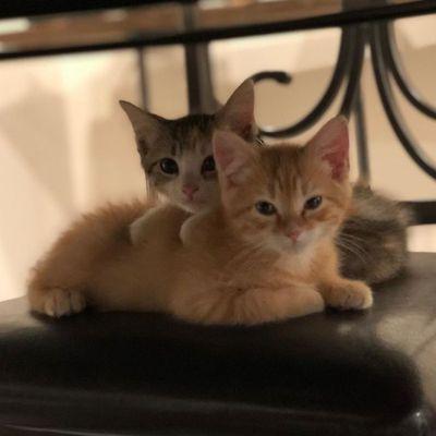 Un duo de chats employé de bureau ...