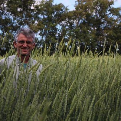 Avec mes blés anciens, je fais la nique à Monsanto