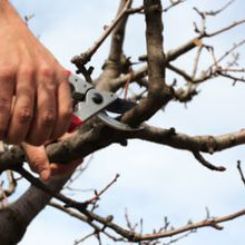Healthy And Balanced Trees with Tree Pruning