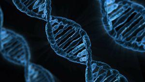 Un pas de plus vers l'immortalité : des scientifiques ont inversé le vieillissement de cellules humaines