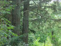 Petit homme au milieu de grands arbres