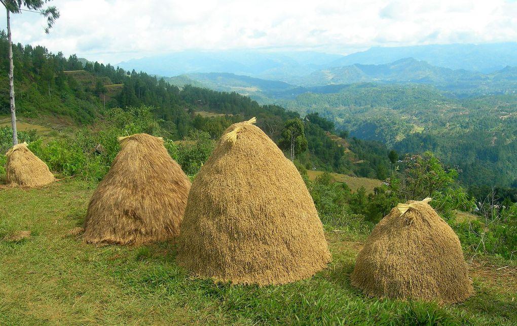 Pays Toraja.