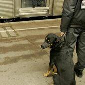 La Ville de Nice teste des maîtres-chiens contre les incivilités dans plusieurs quartiers