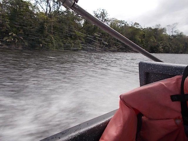 au revoir Tortuguero sur le canal vers Limon ....3 heures.....a 40 km heures    ..(un paresseux apres l'oiseaux les pattes dans l eau de mer ; un chevalier??)