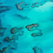 Le corail semble s'habituer au réchauffement climatique, est-ce une bonne nouvelle ?