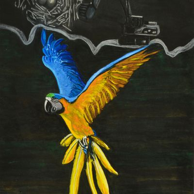 The Macaws against the human hand