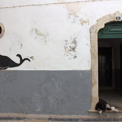 La photo du Jeudi 15 Février 2018. Chronique de l'Algarve n°4.