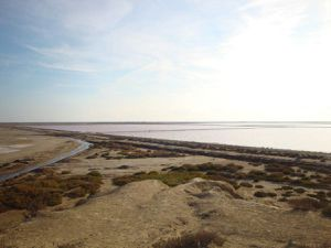 Van vw T4 california : camargue   1er novembre 2014  500 kms