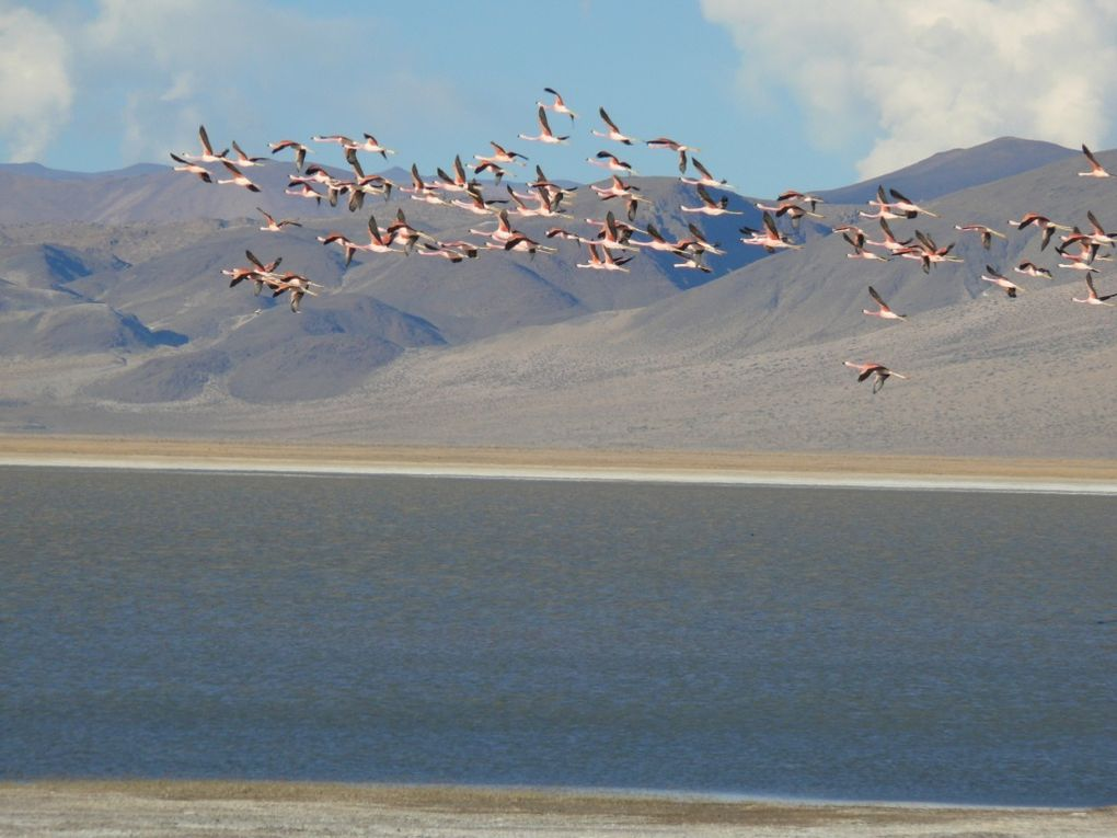 Laguna Blanca et le campo de piedra pomez :