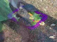Zoo fort mardyck du 24 juillet 2/6 ans