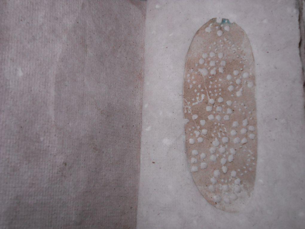 Fossiles de bouleau , dentelles, broderies et gravures