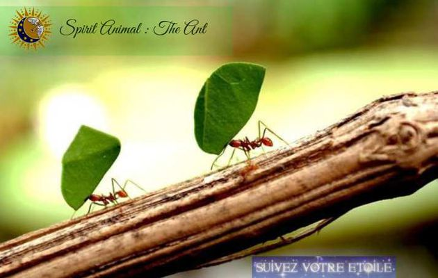 Spirit Animal: the Ant
