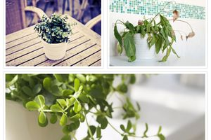 How to save a dying plant – tips