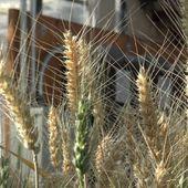 New Gene Editing Tool May Yield Bigger Harvests