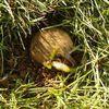 belle prise de printemps: qui est le chat ,est ce une souris?