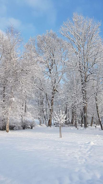 Beauté éphémère d'un regain d'hiver