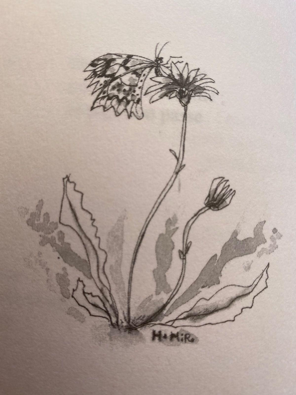Illustration de Hiro Hata ; Un bâton dans les Andes, page 34