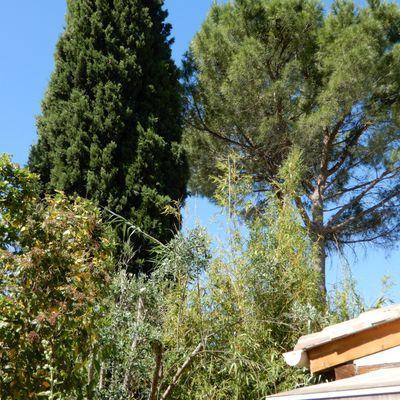 Un jardin méditerranéen en été