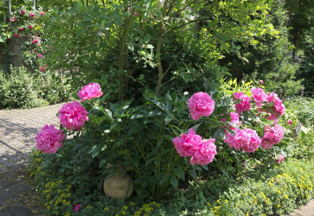Tag der Offenen Gärten in Veitshöchheim war ein Riesenerfolg - Teil 3: Hofgartenidylle im Gartenparadies der Dömlings