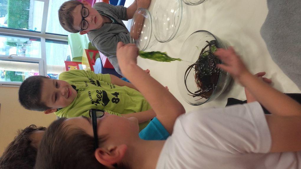 A la découverte des bienfaits des algues