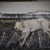 Il Movimento Animalista in piazza a Ravenna per ricordare i cani uccisi in Sicilia