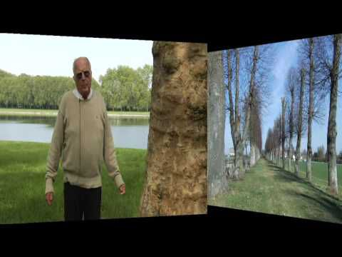 CAMPAGNE NATIONALE :RESPECTONS LES ARBRES