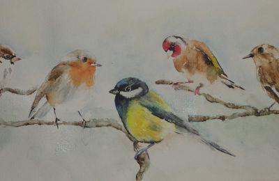 Saint Martin Lalande - Les oiseaux de nos jardins