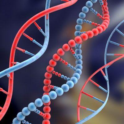 Soirée UMES génétique du 02 Octobre 2008 : Compte rendu