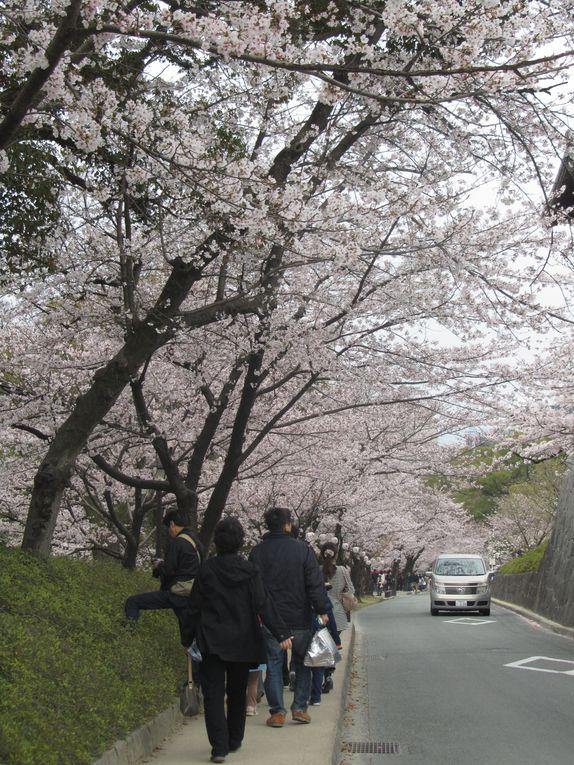 Album - japon-kumamoto-jyou