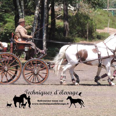 Du Bouleau pour nos chevaux: bonne ou mauvaise idée?