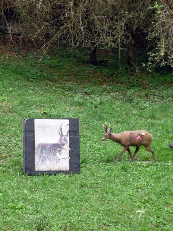 Album - Trotte-Lapin-2011