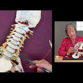 Introduction au stage Mobilité vertébrales et Yoga