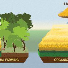 L'agriculture biologique, la sécurité alimentaire et l'environnement