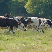 Humour Vache: Ne pas prendre de vacances - Doc de Haguenau