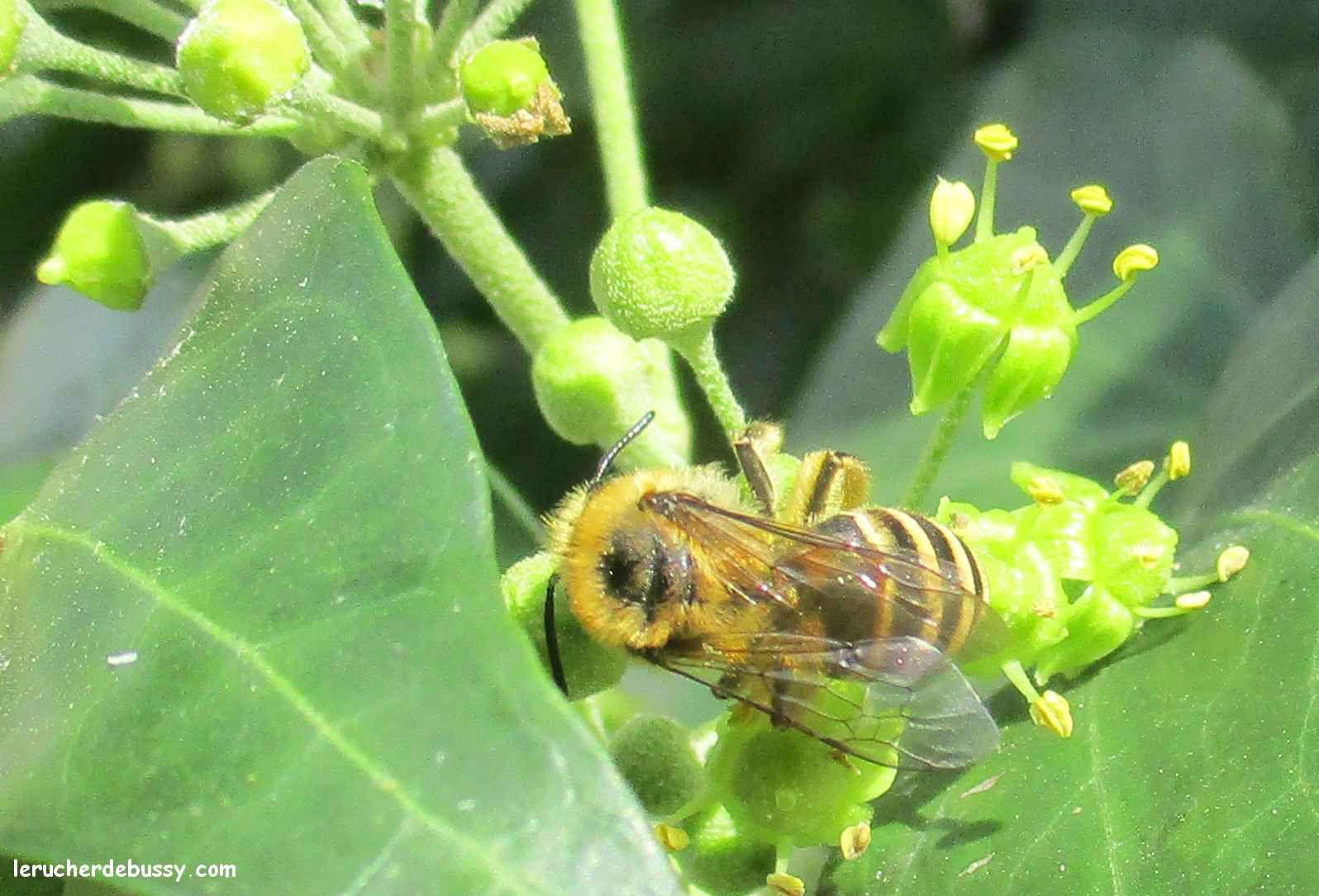 Des nouvelles des ruchers