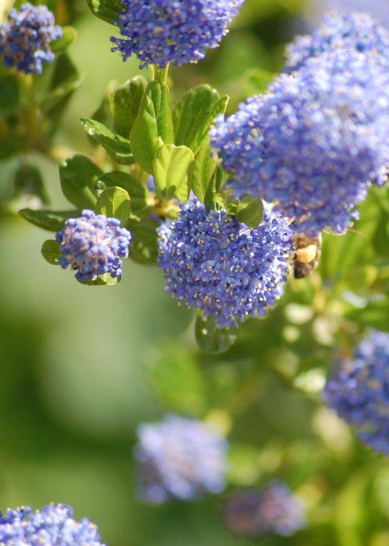 le mois d'Avril passe. Beau temps pour l'ensilage et pendant ce temps là, les abeilles butinent, les fleurs poussent et ... une petite fille se balance...
